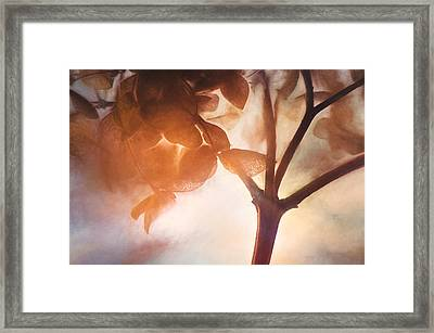 Give Thanks For The Light Framed Print by Scott Norris