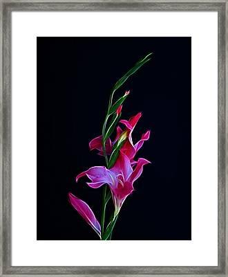 Gladiola Opening Framed Print by Sandy Keeton