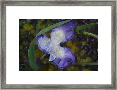 Gladiolus Framed Print by Elizabeth Celio