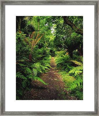Glanleam, Co Kerry, Ireland Pathway Framed Print by The Irish Image Collection