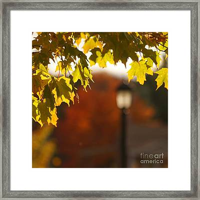 Glimpse Of Autumn Framed Print by Aimelle
