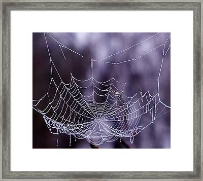 Glistening Web Framed Print by Karol Livote