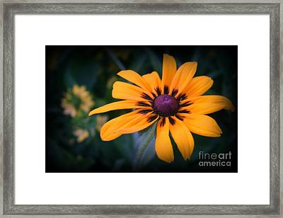 Gloriosa Daisy Framed Print by Kay Novy