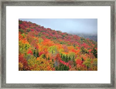 Glorious Framed Print by Betty LaRue