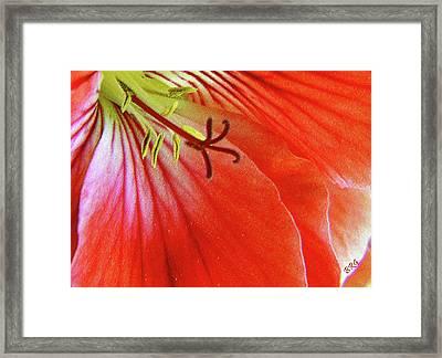 Glorious Geranium Framed Print by Ben and Raisa Gertsberg