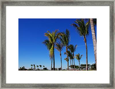 Glorious Palms Framed Print by Zalman Latzkovich