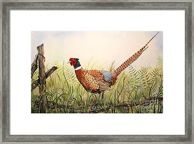 Glorious Pheasant-1 Framed Print by Jean Plout