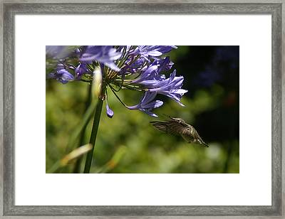 Go For It Framed Print by David Armentrout