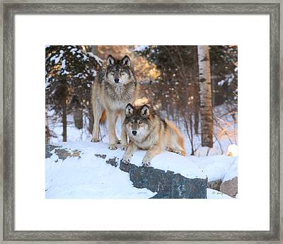 Go Get Him Framed Print by Gerry Sibell