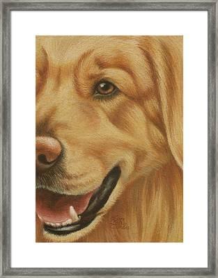 Goggie Golden Framed Print by Karen Coombes