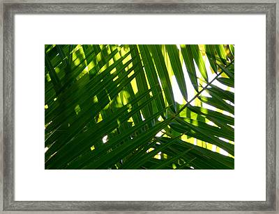Going Green Framed Print by Brad Scott