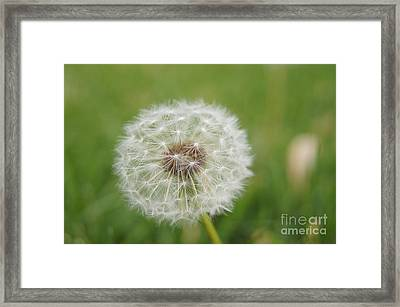 Going To Seed Framed Print by Robert E Alter Reflections of Infinity