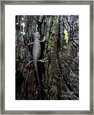 Going Up Framed Print by JoAnn SkyWatcher