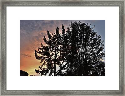 Gold And Blue Sunset Tree Silhouette Iv Framed Print by Linda Brody