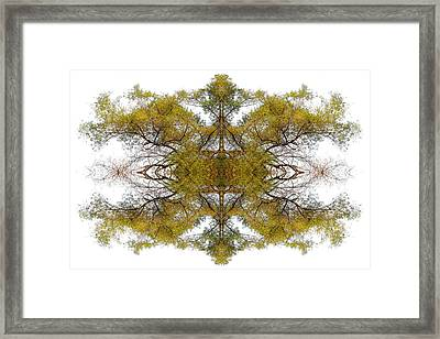 Gold Dust Framed Print by Debra and Dave Vanderlaan