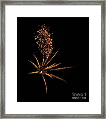 Gold Star Tail Framed Print by Norman  Andrus