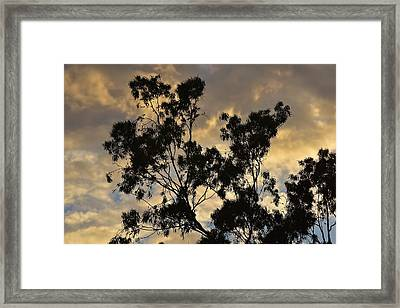 Gold Sunset Tree Silhouette I Framed Print by Linda Brody