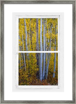 Golden Aspen Forest View Through White Rustic Distressed Window Framed Print by James BO  Insogna