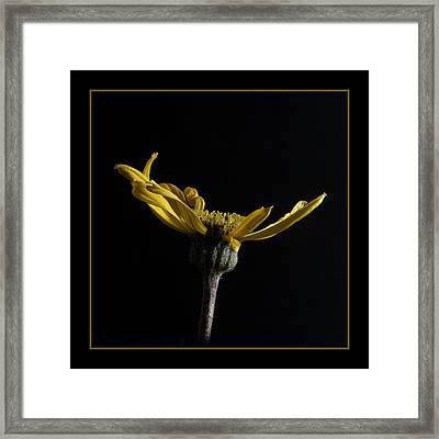Golden Awakening Framed Print by Robert Murray