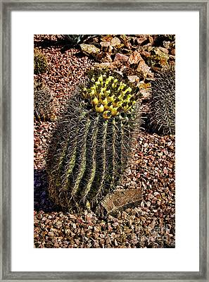 Golden Barrel Framed Print by Jon Burch Photography