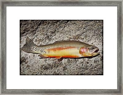 Golden Beauty Framed Print by Kelley King