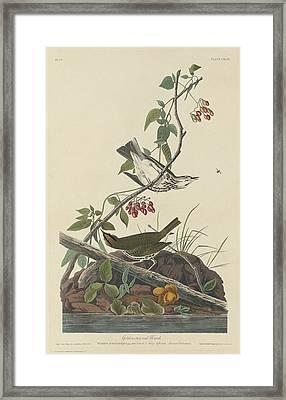 Golden-crowned Thrush Framed Print by John James Audubon