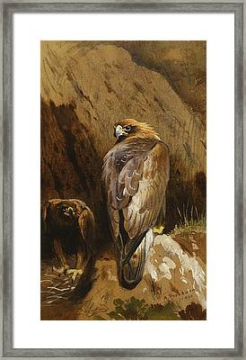 Golden Eagles At Their Eyrie Framed Print by Archibald Thorburn