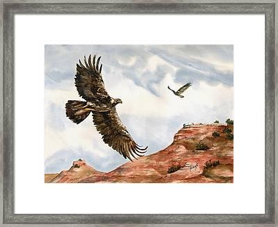 Golden Eagles In Fligh Framed Print by Sam Sidders