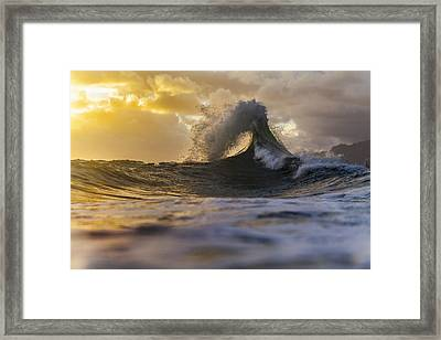 Golden Eye Framed Print by Sean Davey