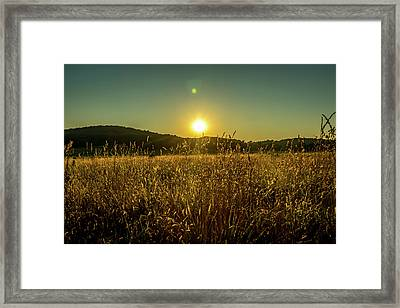 Golden Field Framed Print by Howard Roberts
