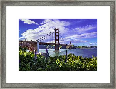 Golden Gate Of Spring Framed Print by Phil Fitzgerald