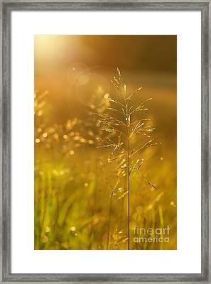 Golden Glow Framed Print by Sandra Cunningham