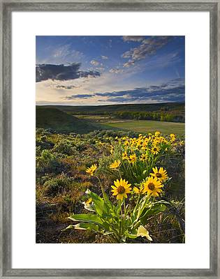 Golden Hills Framed Print by Mike  Dawson
