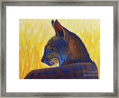 Golden Hour Bobcat Framed Print by Brian Commerford