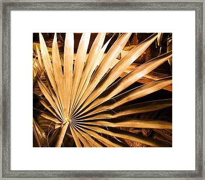 Golden Palm Framed Print by Mindy Newman