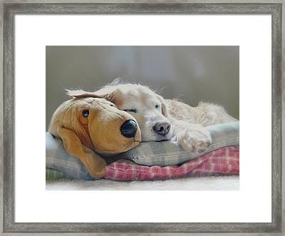 Golden Retriever Dog Sleeping With My Friend Framed Print by Jennie Marie Schell
