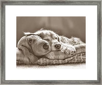 Golden Retriever Dog Sleeping With My Friend Sepia Framed Print by Jennie Marie Schell