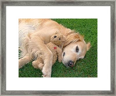 Golden Retriever Dog Teddy Bear Love Framed Print by Jennie Marie Schell