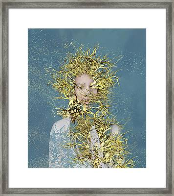 Golden Root  Framed Print by Bojan Jevtic