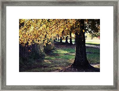 Golden Framed Print by Sarah Coppola