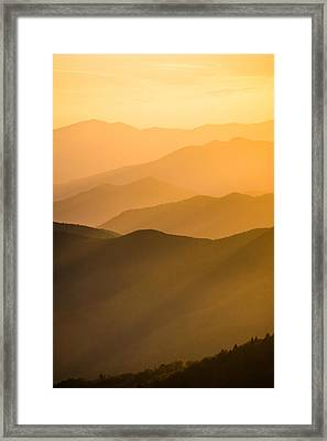 Golden Silhouettes  Framed Print by Shelby Young