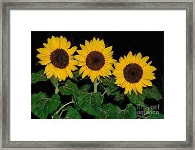 Golden Sunflowers On Black By Kaye Menner Framed Print by Kaye Menner