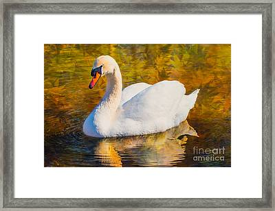 Golden Swan Framed Print by Geraldine DeBoer