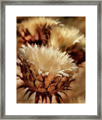 Golden Thistle II Framed Print by Bill Gallagher