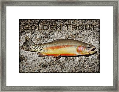 Golden Trout Framed Print by Kelley King