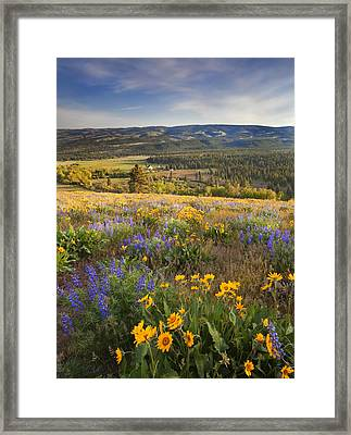 Golden Valley Framed Print by Mike  Dawson