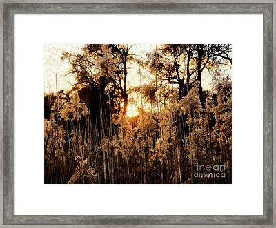 Golden Years   Framed Print by Janine Riley