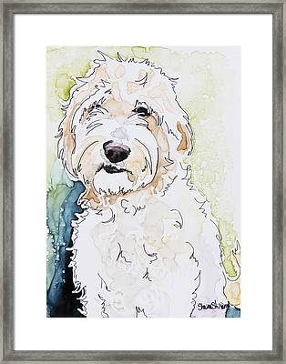 Goldendoodle Framed Print by Shaina Stinard