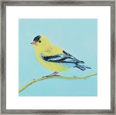 Goldfinch Bird Framed Print by Jan Matson