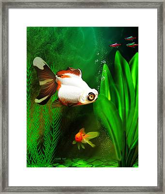 Goldfish Aquarium Framed Print by John Wills